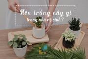 Nên trồng cây gì trong nhà vệ sinh