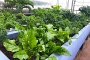 ĐỘC VÀ LẠ - Xu hướng tự trồng rau trên ban công